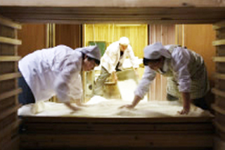 Three people are brewing rice in the Sake Kura of Akita Seishu