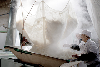In Asamaï Shuzo sake brewery, two toji are collecting the rice at the end of cooking process
