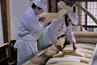 Two employees from Asamaï sake brewery are placing canvas bags before pressing