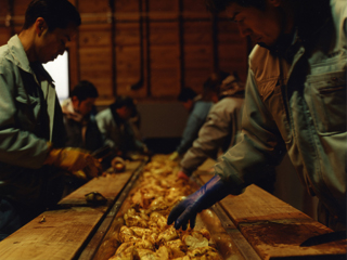 Many people are involved in sorting sweet potatoes for the production of Nishi Shuzo shochu